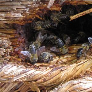 Bienenkorb